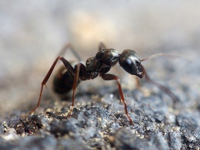 Le formiche queste sconosciute.