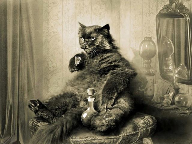 I gatti che hanno cambiato la cultura russa