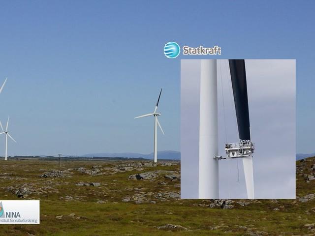 Dipingere di nero una pala di una turbina eolica può ridurre del 70% le collisioni dell'avifauna