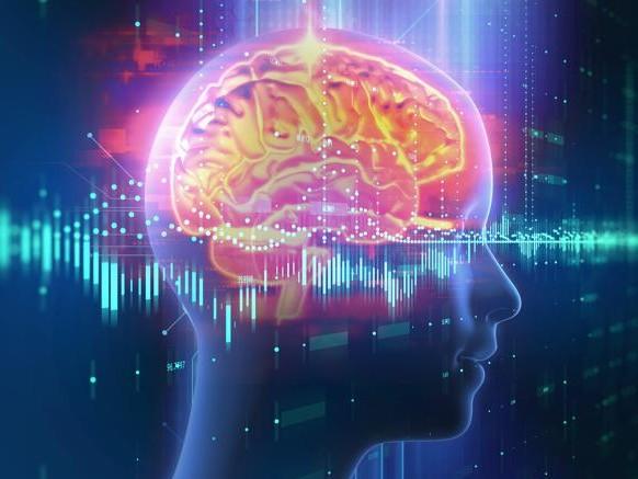 Francesca Talpo spiega le prossime tappe della ricerca sul cervello