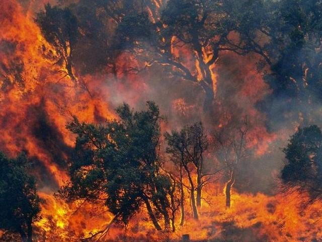 Vasti incendi in Sardegna: è allerta per il vento di maestrale che nelle prossime ore supererà i 60 km/h
