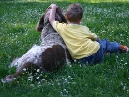 Proteggere noi stessi e il nostro cane dalla Leishmaniosi