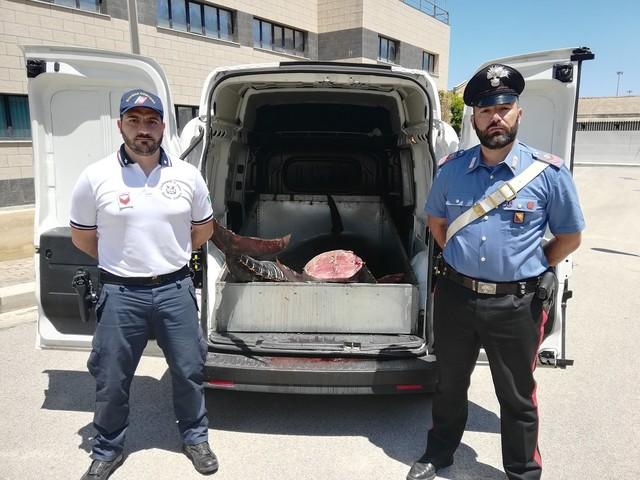 Maxi sequestro di tonno a Palermo, multe per 16 mila euro ai venditori