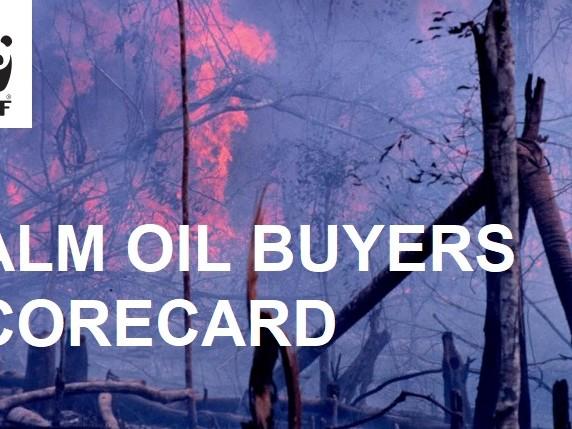 """Wwf: il passaggio all'olio di palma """"sostenibile"""" è un fallimento"""