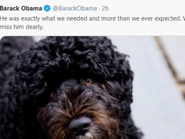 """Obama annuncia la morte cane Bo: """"Vero amico e compagno fedele"""""""