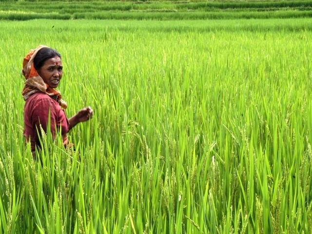 Coldiretti, arrivano dazi Ue per il riso asiatico