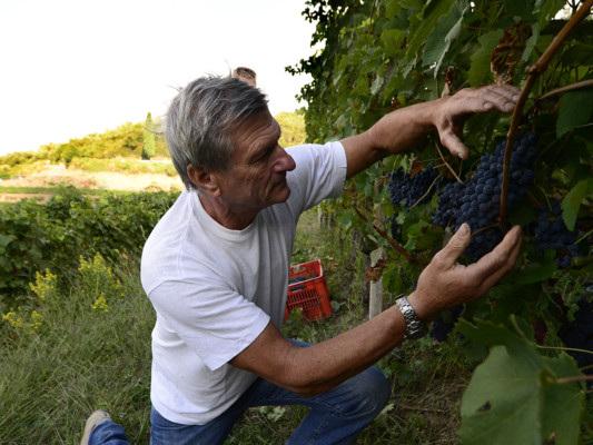 """L'Italia è ancora il """"Paese del vino"""". Battute Francia e Spagna su produzione e qualità"""