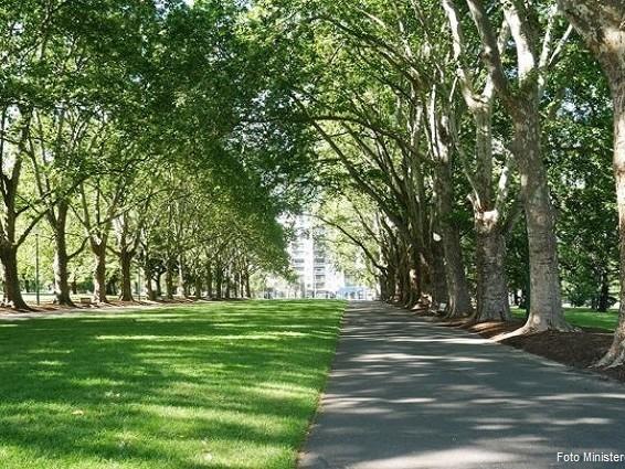 Forestazione urbana: 30 milioni di euro nel 2020 – 2021 per le Città metropolitane