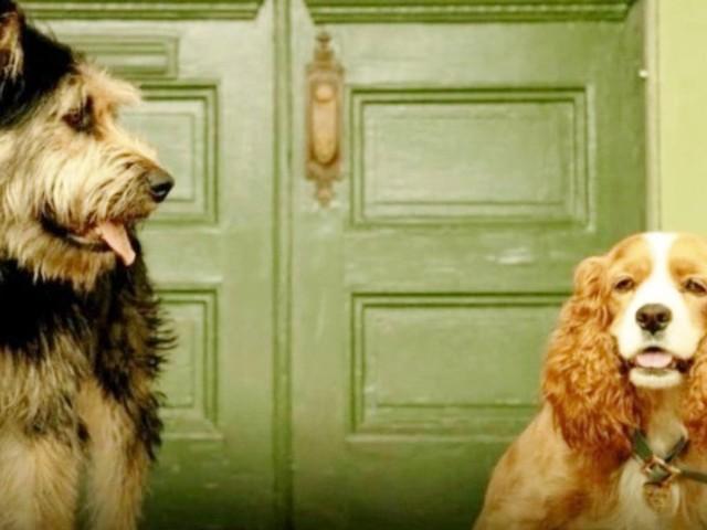 Lilli e il vagabondo: svelato il cast di cani del remake live-action Disney