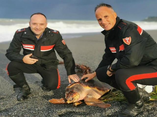"""Scalea, tartaruga """"caretta caretta"""" impigliata in una rete e ferita: salvata dai carabinieri"""