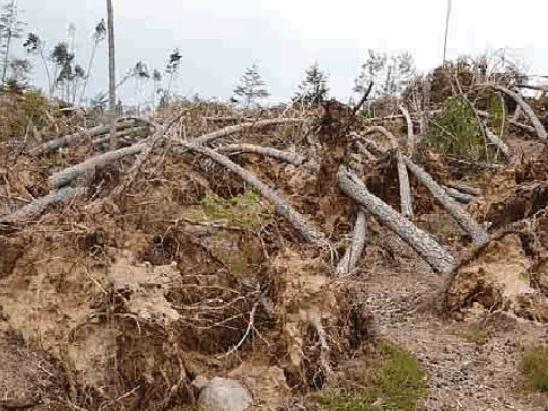 Contributi per la tempesta Vaia nuove regole, più ampie da parte della Provincia