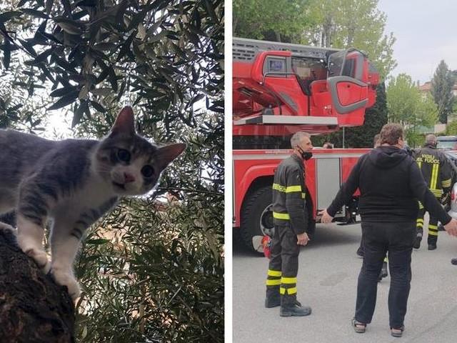 Gatto sale su un albero alto oltre 10 metri e non riesce più a scendere: salvato dai vigili del fuoco