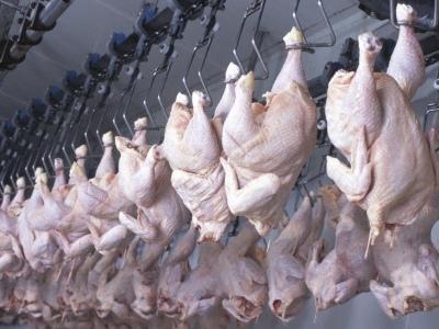 Benessere dei polli, Efsa individua i punti critici nel momento della macellazione. Il primo documento di una serie