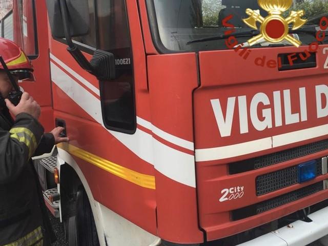 Roma, pino cade davanti al Carrefour: paura tra i passanti