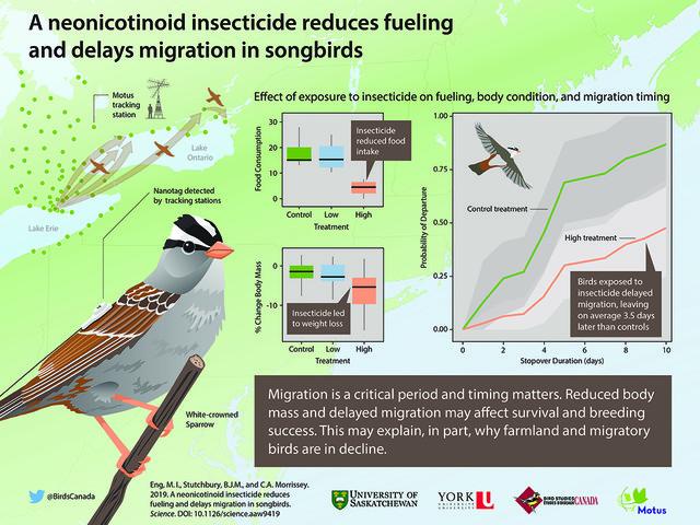 Non solo api, gli insetticidi neonicotinoidi minacciano anche la sopravvivenza degli uccelli selvatici