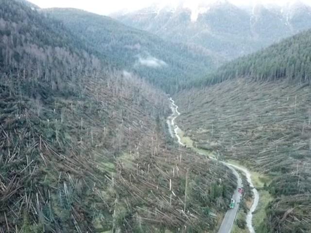"""Maltempo. Distrutti i boschi dell'Altopiano delle Alpi, 300 mila alberi caduti: """"Come in guerra"""""""