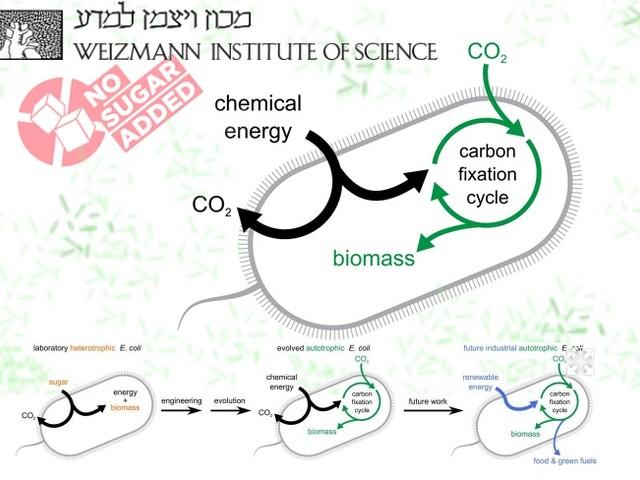 Realizzati batteri Ogm che mangiano aria e divorano CO2