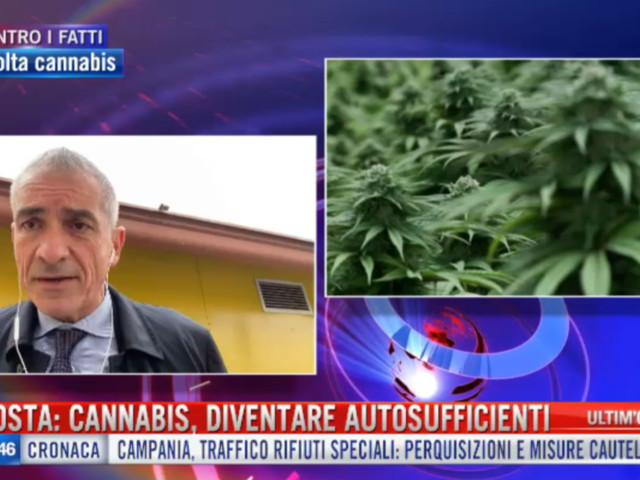 """Costa a Tgcom24: """"Necessario diventare autosufficienti nella produzione di cannabis terapeutica"""""""