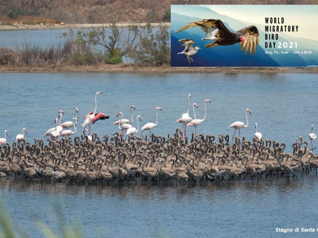 Giornata mondiale uccelli migratori, Legambiente: «Aggiornare Strategia nazionale biodiversità e prevedere più aree protette»