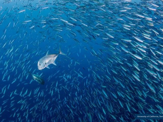 Le banche del pesce