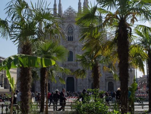 A Milano si pianteranno 100 mila nuovi alberi nei prossimi due anni