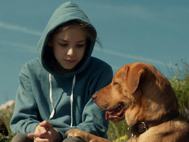 Cinque film che affrontano il tema della perdita di un amico a quattro zampe