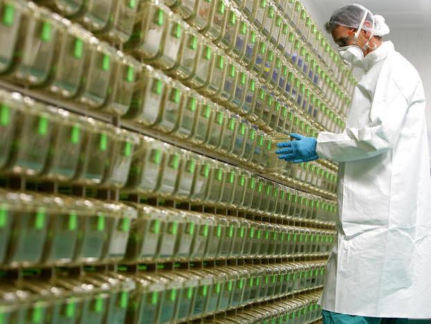 Vaccini anti-covid in Trentino Per la prima fase arriveranno 17-20mila dosi da Pfizer
