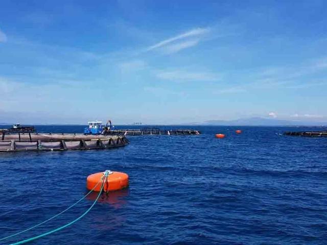 Un impianto offshore per la nuova piscicoltura