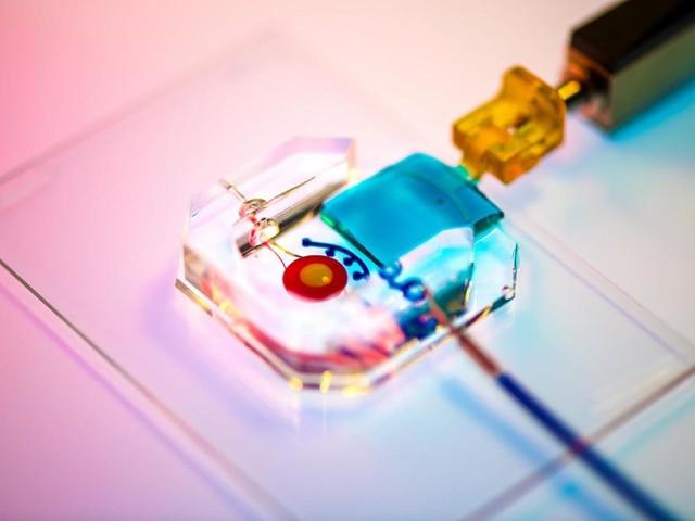 Creato occhio artificiale in 3D con cellule umane