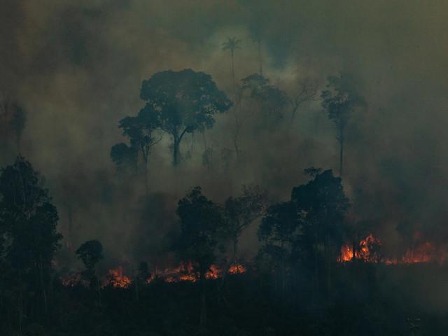Amazzonia, in un anno persa un'area di foresta equivalente a 1,4 milioni di campi da calcio