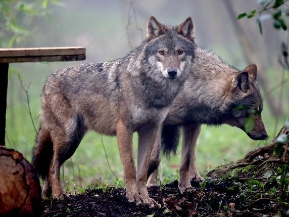 Itinerari a cavallo nel Parco della Majella sulle tracce dei lupi
