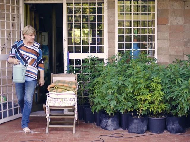La cannabis di Rita Bernardini: «Disobbedienza civile per i malati e contro le mafie»