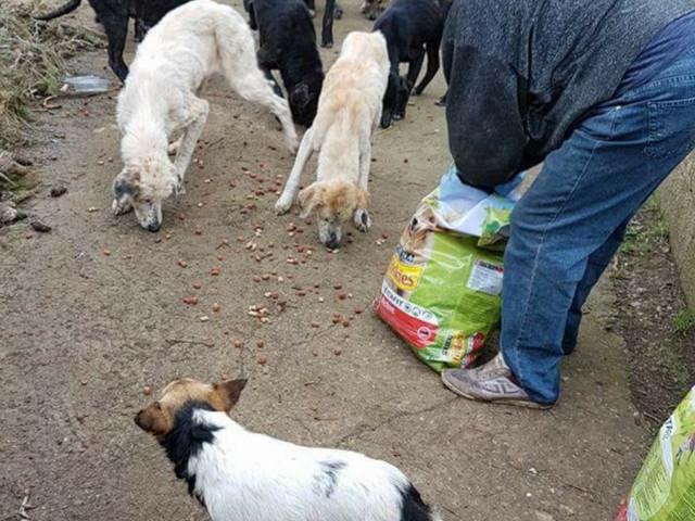 Martina Franca, l'anziana in difficoltà cerca di curare i dieci cani. Ma è dura per lei e per loro Intervento dei servizi sociali e dell'Asl, la 74enne ha bisogno di aiuto: appello