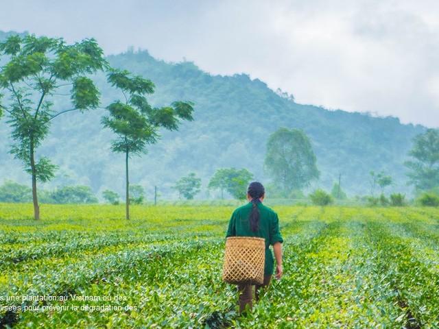 World Environment Day, Onu: cambiare il nostro stile di vita e ripensare la nostra relazione con la natura