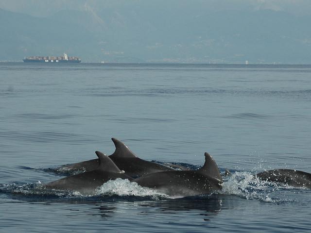 Nel mare della Toscana verrà istituita la più grande area europea di protezione dei tursiopi