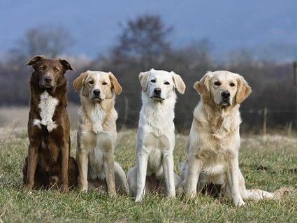 Le origini del cane e la sua evoluzione.