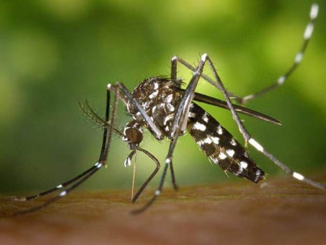 Rovereto: arriva la task-force contro la zanzara tigre