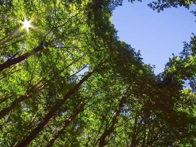 Vezua, il marketplace etico che dà vita a nuove foreste