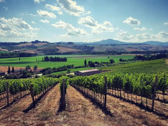 Cantina Cordeschi racconta come si fa il vino
