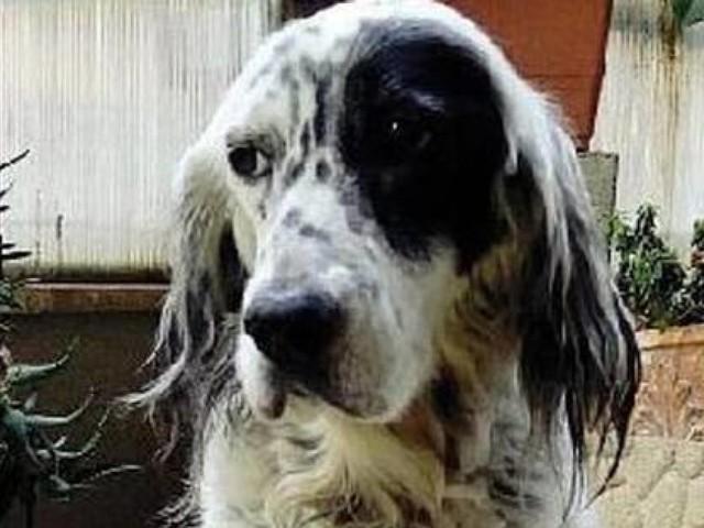Chiede di poter assistere la sua cagnolina malata, le viene concesso il permesso retribuito
