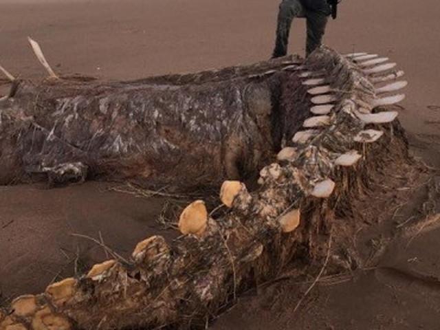 """Scozia, dopo la tempesta Ciara riaffiora uno scheletro misterioso e molti """"gridano"""" al mostro di Loch Ness"""