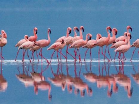 """Il lavoro dei sogni alle Bahamas: resort cerca un """"guardiano di fenicotteri"""""""