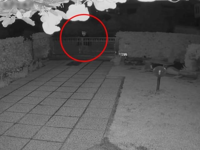 """Raffica di kalashnikov contro la villetta di un pensionato, i carabinieri di Legnano arrestano il """"Gorilla"""". Il video dell'attentato"""