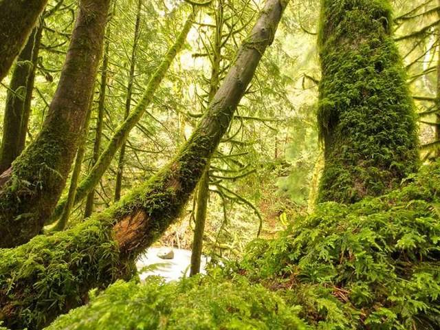 6 milioni di nuovi alberi per il Lazio, è il progetto Ossigeno