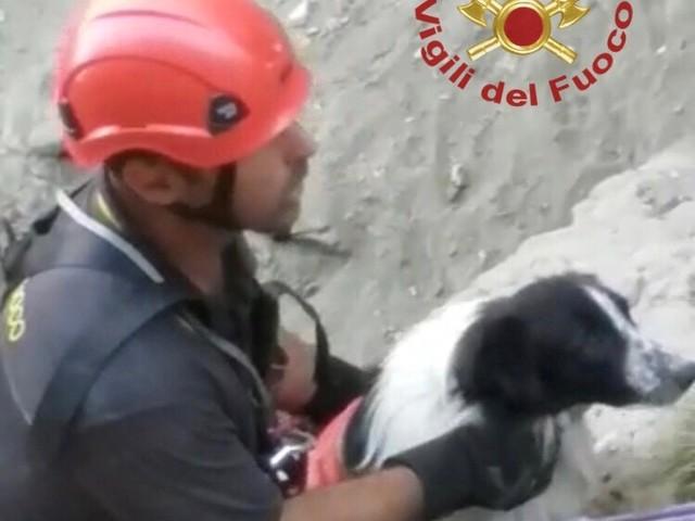 Cane cade in un dirupo a Vulcano, salvato dai vigili del fuoco (FOTO e VIDEO)