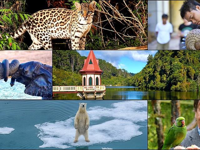 """Dall'eroe dei pangolini alla foresta per il giaguaro: di fronte ai """"faremo"""" della politica, nove storie di chi ha già creato la sua arca di Noè"""
