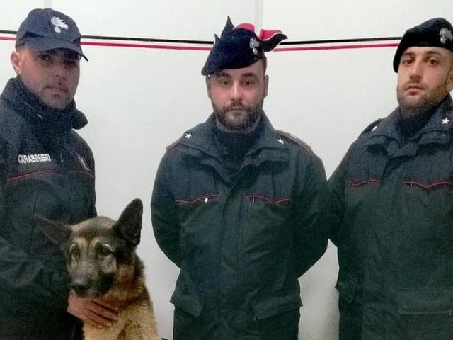 I cani antidroga dei carabinieri scovano quattro presunti spacciatori