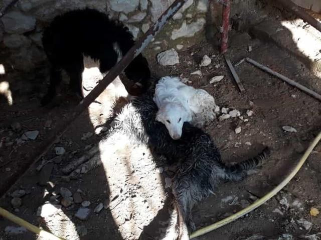 """Cani segregati in un casolare per giorni, senza cibo né acqua: """"Vederli è stato straziante"""""""