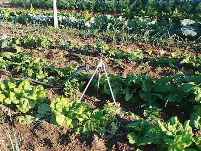 Cosa piantare a novembre: il calendario della semina a seconda delle zone termiche, seguendo le fasi lunari
