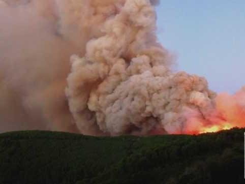 """Pisa, nasce la prima comunità cittadina che protegge i boschi dagli incendi. L'esperto: """"Eventi estremi in aumento, anche in Italia"""""""